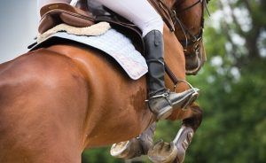 Horse Recovery Supplements