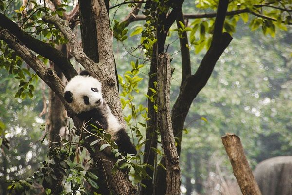 panda algorithm update