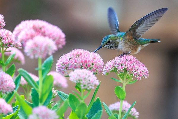 hummingbird algorithm update